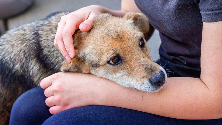 飼い主は愛犬のてんかん発作を前兆行動から予測できるか?というリサーチ結果