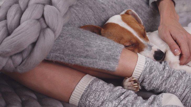 犬が飼い主の「足元」で眠る理由とは?