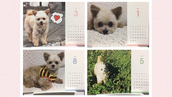 まさかのワンコイン!愛犬の写真で『卓上カレンダー』を作っちゃおう♡