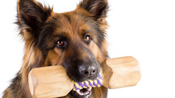 室内犬が家の柱や壁をかじる3つの理由と防止法