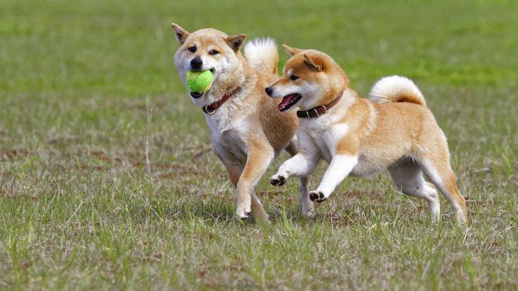 犬は18歳で表彰をされる?犬種による寿命の違いと長生きさせるためのポイント