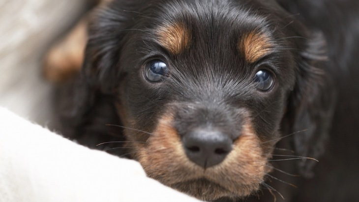 子犬のお腹がパンパンに膨れる理由と対処法