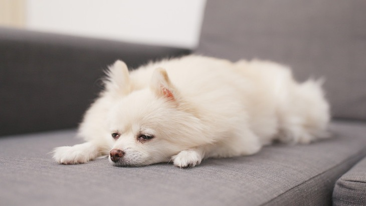 犬にむくみがあるときの原因と考えられる病気、対処法について