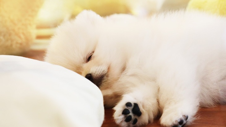 犬の肉球が冷たくなる原因と対処法