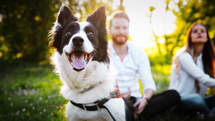 犬を愛し、犬に愛される人が必ずしている4つのこと