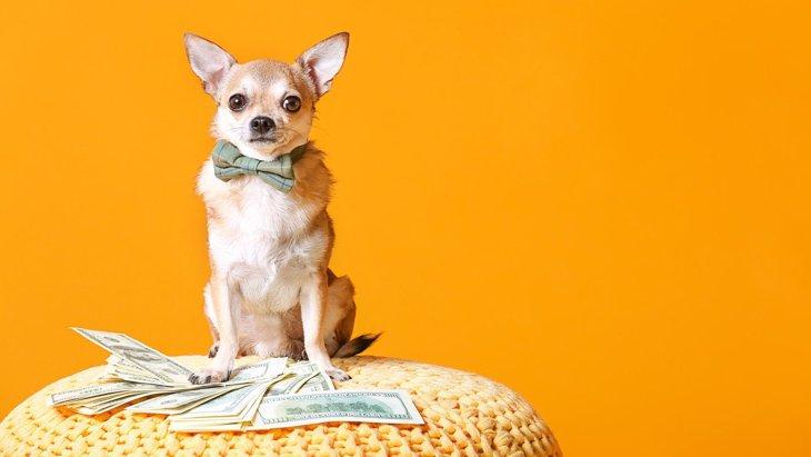 犬のために『貯金』はするべき?万が一に備えた必要額とは?