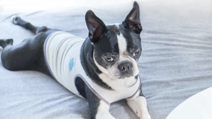 犬のテンションが異常に低い時の心理5つ!どうやって接するのがベスト?