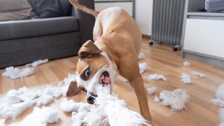 犬を興奮させすぎるとどうなる?危険性や予防法について