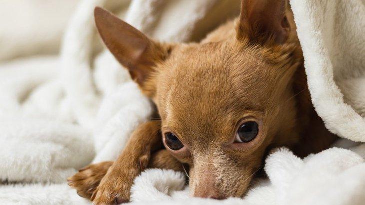 犬が飼い主の喧嘩を止めようとしている時にする仕草や行動5選