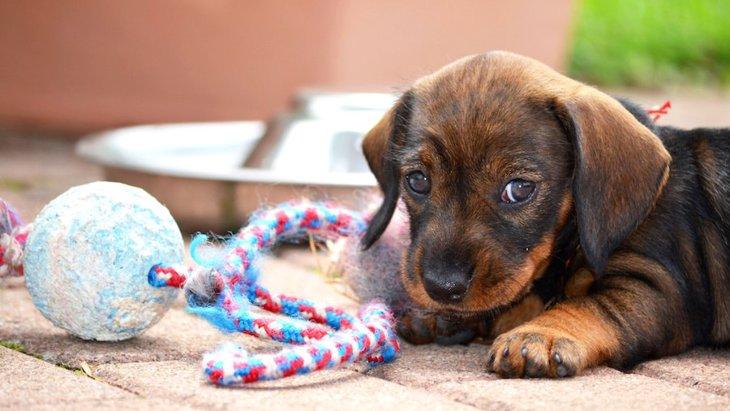 犬の月齢別の育て方~0ヶ月から12カ月まで~