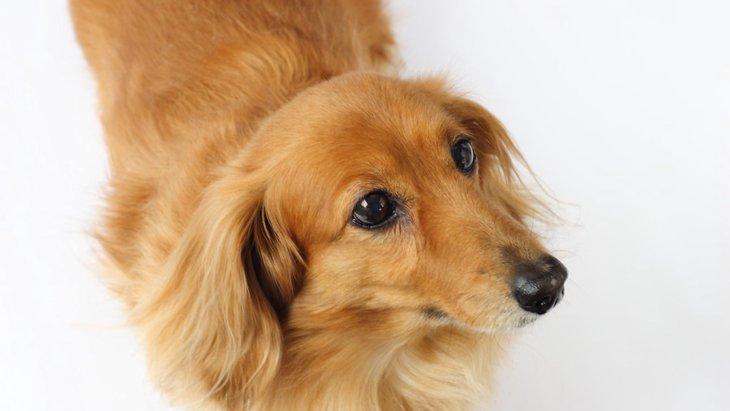 愛犬の仕草でわかる7つのSOS!気付きにくいその症状、危険かも?