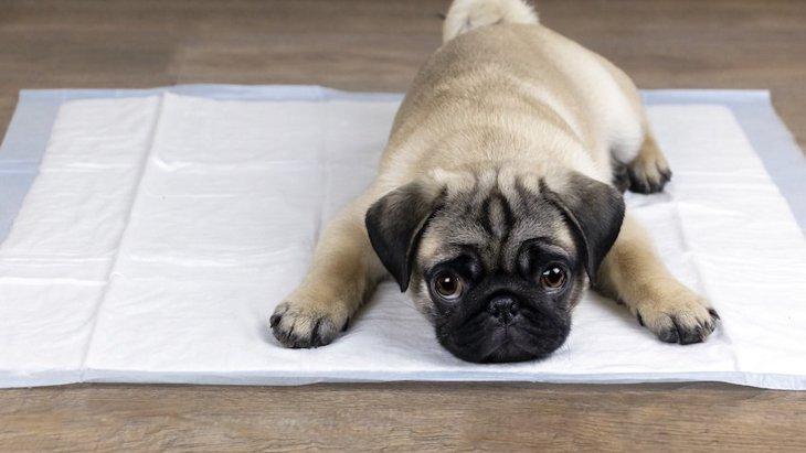 愛犬が最近よくトイレに行く…。考えられる原因と対処法
