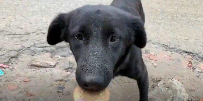 腹ペコなのにドッグフードを食べてくれない野良犬…何とか食べさせたい!