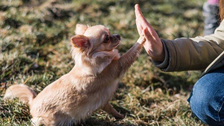 犬はなぜ『飼い主の真似』をするの?3つの理由とよくやる仕草