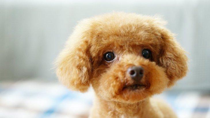 犬にとってストレスになること5つ