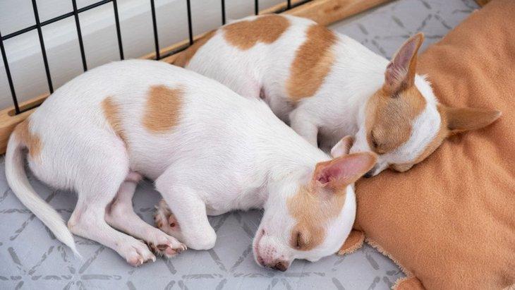 寝るときに犬はケージに入れるべき?