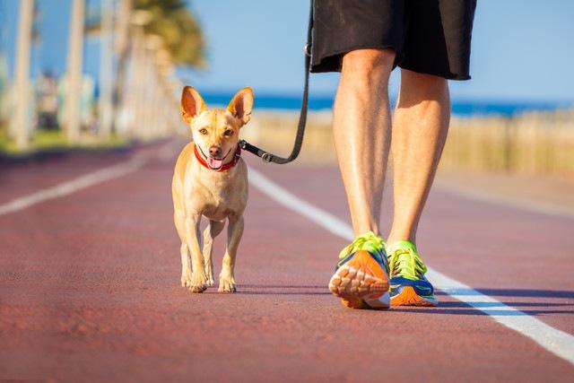 犬が散歩中に吠える3つの原因とやめさせる方法