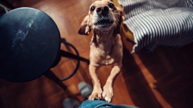 犬が飼い主に体当たりをする心理3選!嬉しい?怒ってる?どんな意味があるの?