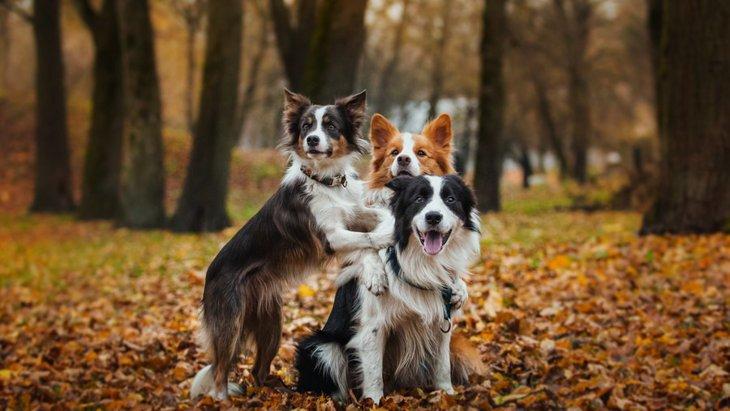 神経質な性格を持つ犬種5選