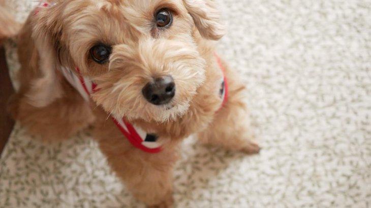 犬が飼い主に気を使っているときの仕草や行動5つ