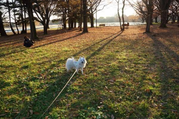 愛犬と一緒に楽しめる昭和記念公園の魅力