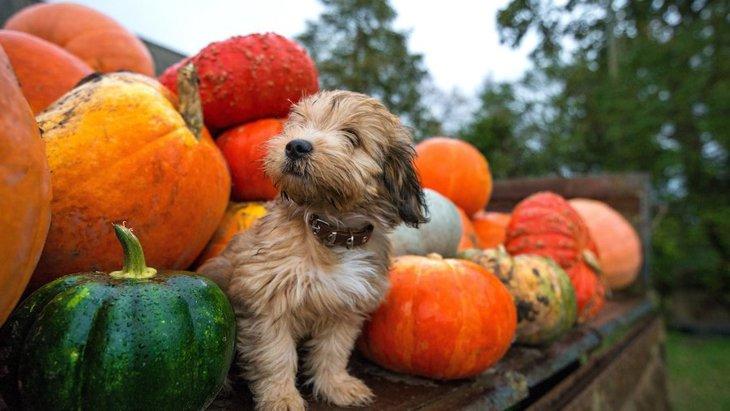 犬に『食物繊維』は必要?野菜の与え方のポイント3選