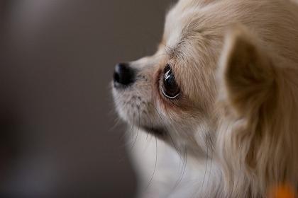 犬の突然死について