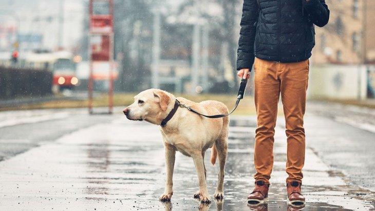犬のために梅雨対策!犬の皮膚病「ホットスポット」の予防法と対処法