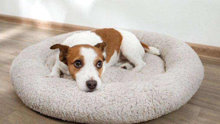 犬が自分のウンチを踏んでしまう原因3選!踏ませないための対策やコツとは?