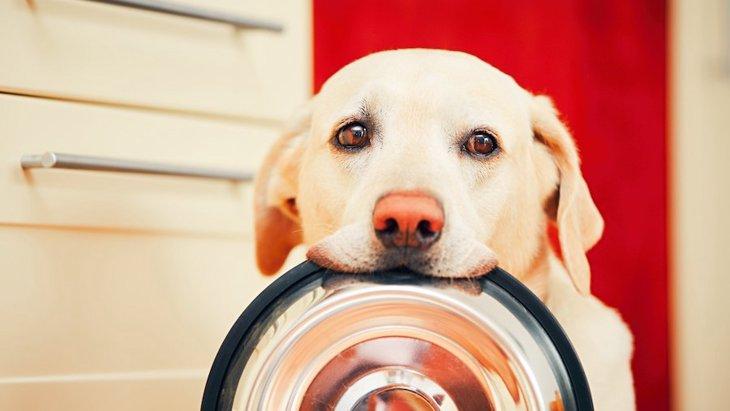 犬が『ンーンー』鳴くときの心理4つ