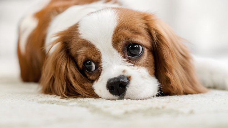 意外な理由も?犬が『ため息』をつく時の心理5つ