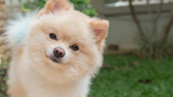 犬は言葉を覚えることができる?覚えさせるコツ3つ