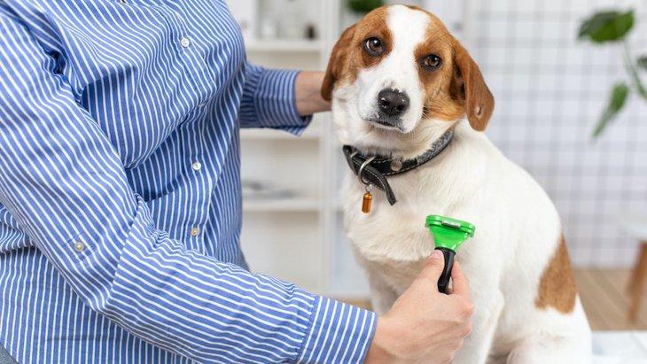 犬の『お手入れ』におけるNG行為2つ