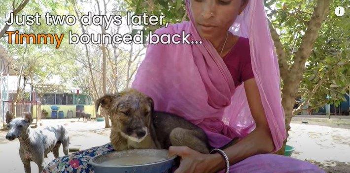 ひどい感染症で顔が腫れた子犬。無事元気になった姿で母犬と再会!