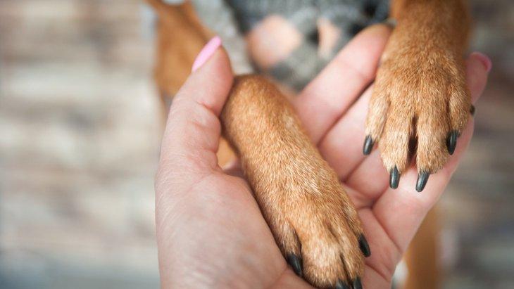犬が飼い主に『前足を乗せる』心理7選