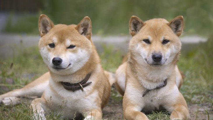 仲が良くない犬同士がしている仕草や態度4つ