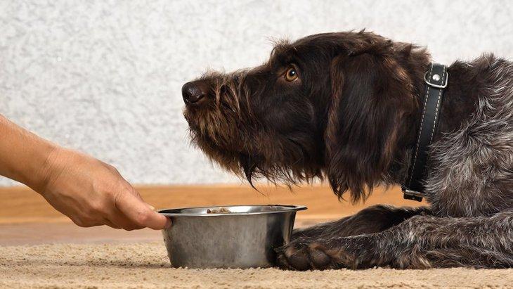 なぜ犬は食事中に触ると怒るの?主な理由と覚えておきたいこと