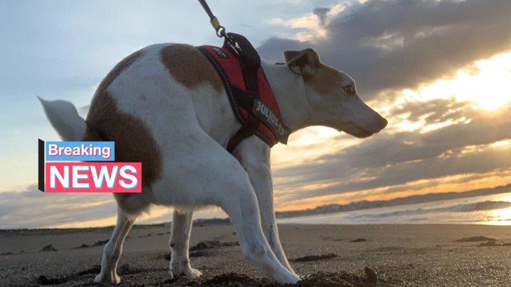 神々しいウンチングスタイル!?朝焼けに映える犬の姿が話題に!