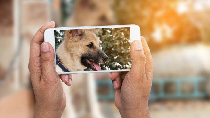 他人の犬の写真を勝手に撮影してもOK?