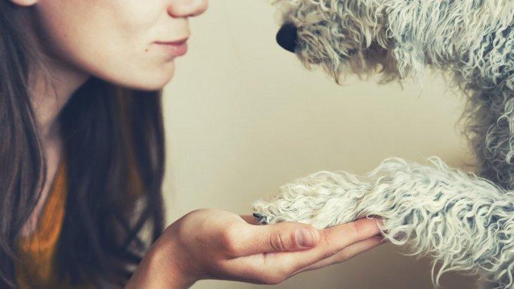 犬に「お手」「おかわり」は何のために教えるの?必要性は?