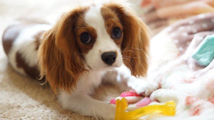 『心が優しい犬種』5選