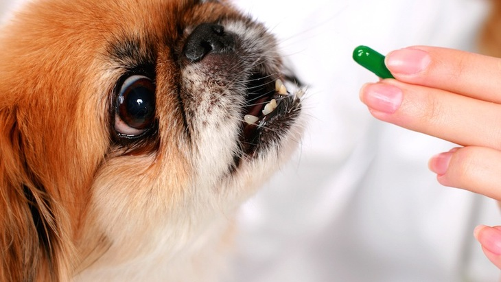 動物看護師オススメ!犬に投薬する時のポイントご紹介