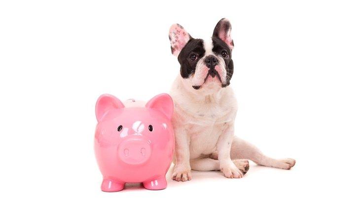 犬に負担をかけず節約!『お金をかけなくてもいい犬用品』トップ5