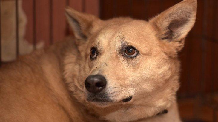 犬に『恐怖感』を植え付けてしまうNG行為5選