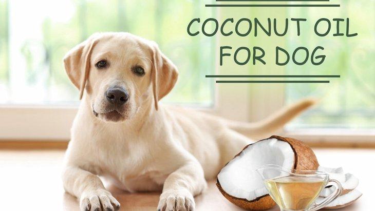 犬の食事にオイルを取り入れよう!主な種類とメリット