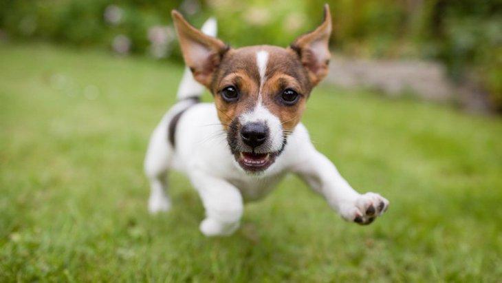 興奮が収まらない犬への対処法4つ