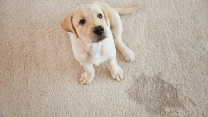 犬のトレーニングで絶対やっていけないNG行為5選