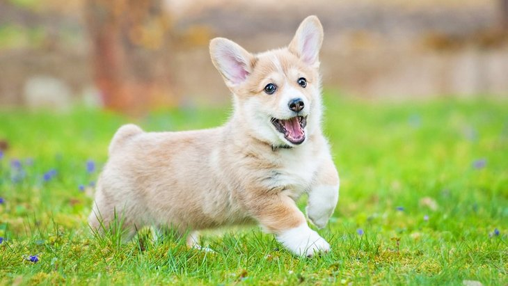 子犬がハイテンションな理由と気を付けるべきポイント