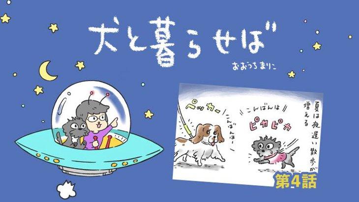 犬と暮らせば【第4話】「真夏の夜の犬」