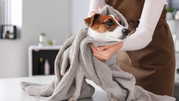 狂犬病予防接種シーズン到来!動物病院でするべきコロナ対策